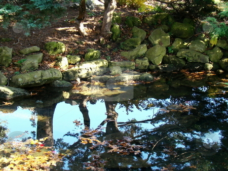 Reflection on pond stock photo, Trees reflecting on pond by CHERYL LAFOND