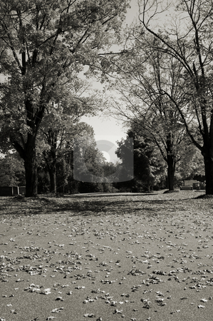 Fall in black and white stock photo, Fall road shown in black and white by Tim Markley