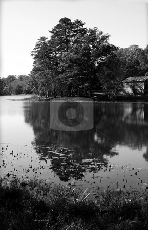 Fall in black and white stock photo, A pond in black and white during the fall by Tim Markley