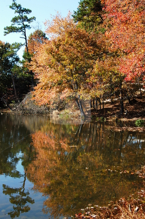 Leaves on the water stock photo, Reflections of leaves on the water during the fall by Tim Markley