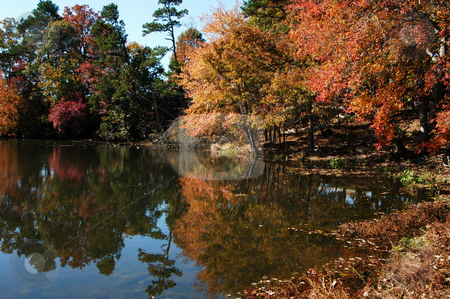 Double vision stock photo, A reflection of trees on the water during the fall of the year by Tim Markley