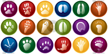 Animal tracks buttons stock vector clipart, Eighteen various animal track buttons by Adrian Sawvel