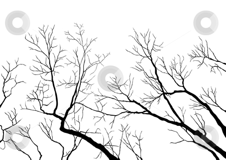 Bare Branches stock vector clipart, Bare Tree Branches by Adrian Sawvel