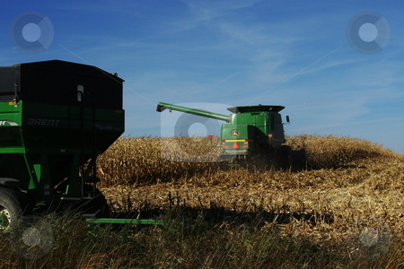 Iowa fall corn harvest stock photo, A big green combine moves back into an Iowa cornfield after transfering the corn it has picked and separated from ears into a waiting farm wagon.   Iowa usually leads the nation and the world in corn production. by Dennis Thomsen