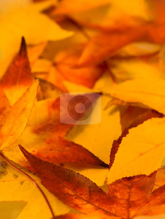 Autumn background stock photo, Bed of autumn red and yellow leaves by Laurent Dambies