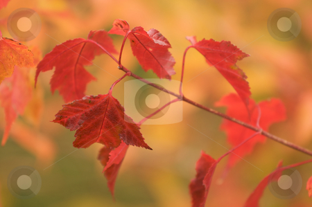 Autumn Leaves stock photo, Autumn Leaves Abstract Background Image by Andy Dean