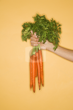 Hand holding carrots. stock photo, Close up of woman holding bunch of carrots on yellow background. by Iofoto Images