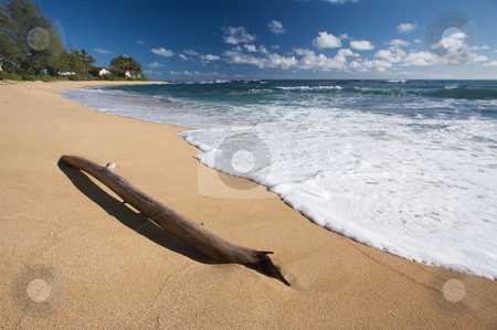 Tropical Shoreline stock photo, Tropical Shoreline and Driftwood on Kauai, Hawaii by Andy Dean