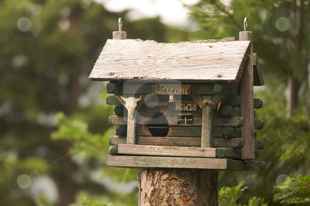 Rustic Birdhouse stock photo, Rustic Birdhouse Amongst Pine Trees by Andy Dean