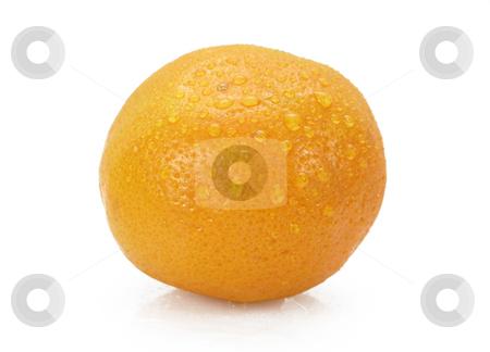 Orange stock photo, Orange by John Teeter