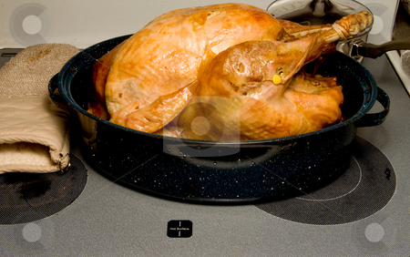 Cooked Turkey on tray stock photo, A hot and delicious freshly cooked turkey. by Robert Byron