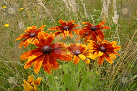 Flowers in my garden stock photo, Lovely and beautiful flowers in my garden by Joanna Szycik