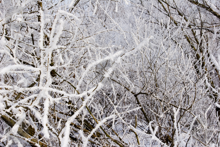 Frost covered trees and plants stock photo, View of frost covered trees and plants by Mark Yuill