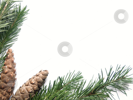 Pine background stock photo, Pink background by John Teeter