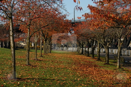 Fall in Portland Oregon stock photo, Fall scene in Portland Oregon by Tim Markley
