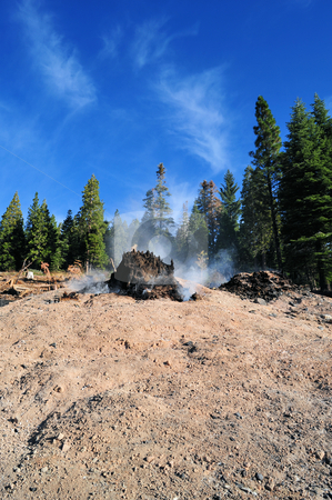 After Forest Fire stock photo, Clear blue sky and smoldering tree stump and ashes after a forest fire by Lynn Bendickson