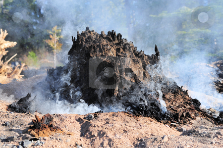 Smoldering Tree Stump stock photo, Tree stump burnt and smoking after a forest fire by Lynn Bendickson