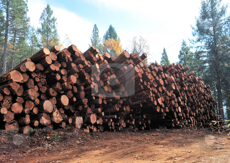 Fresh Cut Logs stock photo, Fresh cut logs ready to be trucked to the mill by Lynn Bendickson