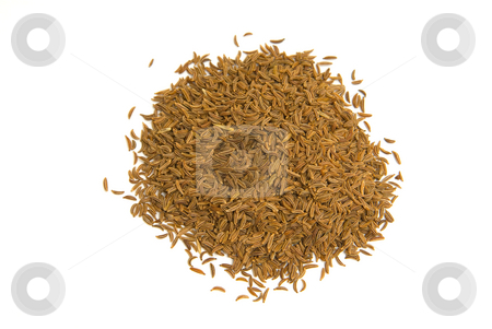 K?mmel (Carum carvi) - Caraway or Persian cumin stock photo, K?mmel, botanisch Wiesenk?mmel oder Gemeiner K?mmel (Carum carvi), ist eines der ?ltesten Gew?rze in der Familie der Doldenbl?tler (Apiaceae). - Caraway or Persian cumin (Carum carvi) is a biennial plant in the family Apiaceae, native to Europe and western Asia. by Wolfgang Heidasch