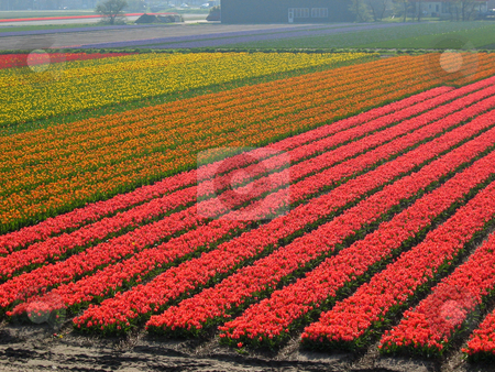 Colorful Flowers stock photo,  by Wolfgang Heidasch