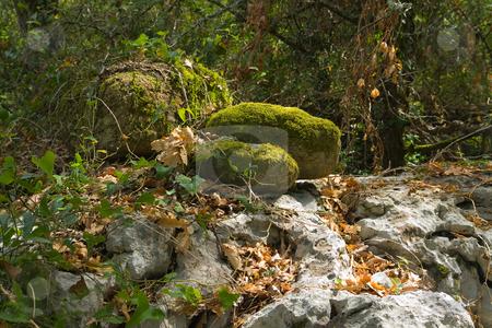 ?berwachsener Fels im Wald stock photo, In S?dfrankreich by Wolfgang Heidasch