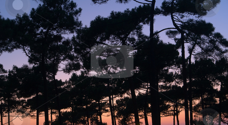 Tree silhouette stock photo, Urlaub Sommer 2007 Frankreich by Wolfgang Heidasch