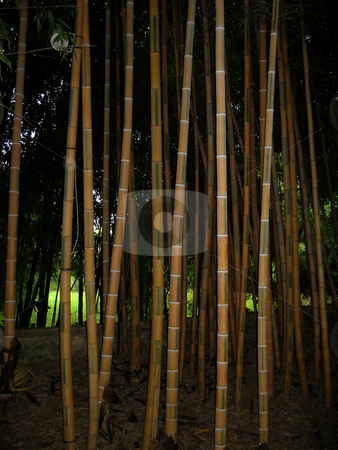 Bamboo stock photo,  by Wolfgang Heidasch