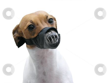 Animal Lecter stock photo, Animal Lecter by John Teeter