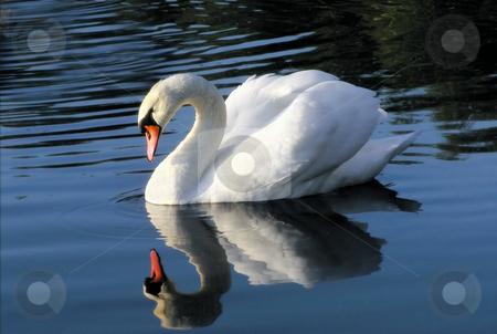 """swan lake muslim singles Rudolf nureyev died of aids related margot fonteyn and rudolf nureyev received 89 curtain calls at the end of """"swan lake"""" his parents were muslim tatars."""