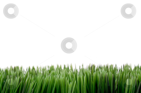 Green grass stock photo, Image with green grass at the bottom, white space above for copy. by Vince Clements