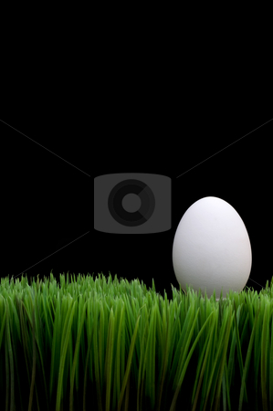 White egg on grass stock photo, White egg on grass with a black background by Vince Clements