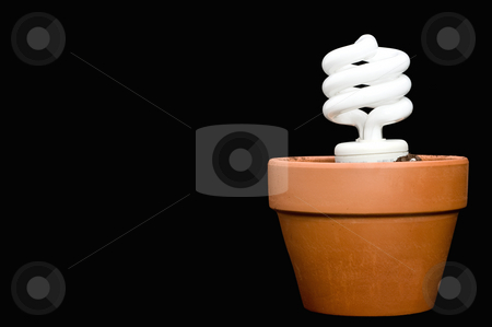 A compact fluorescent bulb in a planter stock photo, A glowing compact fluorescent bulb in a planter with space for copy on the black background by Vince Clements