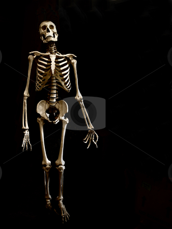 A collection of bones stock photo, Skeleton on black background. by W. Paul Thomas