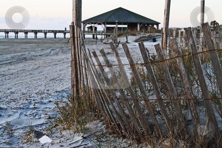 Sand dunes stock photo, Fence protecting sand dunes on tybee island beach by Jack Schiffer