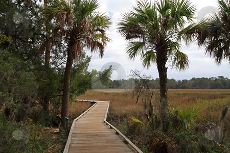 Walkway Thru The Marsh stock photo, Wooden boardwalk trailing thru the marsh lands of Savannah Georgia by Jack Schiffer