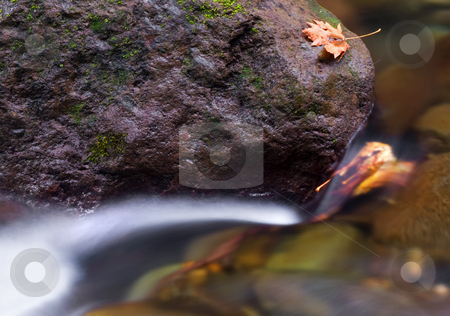 A Breath from the Edge stock photo, A lone maple leaf seems just a breath from the edge as it lies precariously on a boulder amidst a rushing stream by Mike Dawson