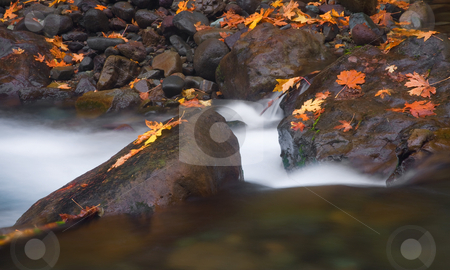 Autumn Scattered stock photo, A small stream flows between rocks covered in Autumn leaves. by Mike Dawson