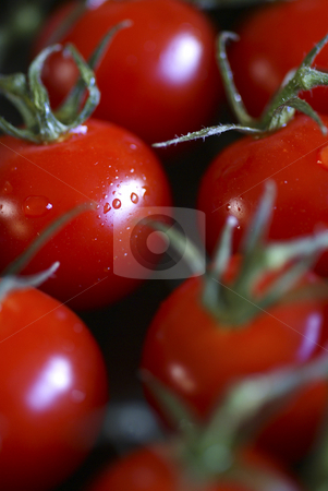Piccolo stock photo, A macro shot of fresh, ripe, red, cherry tomatoes, straight from the vine, taken at an oblique angle with the focus on a single tomato and the others in soft focus. by Tim Green
