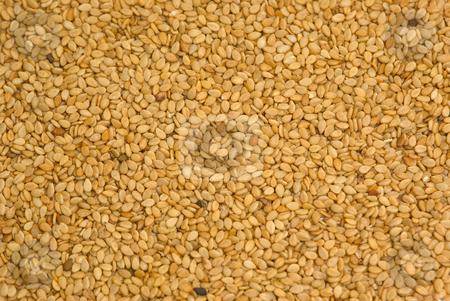 Sesam Sesamum indicum - Sesame stock photo, Der Sesam (Sesamum indicum) ist eine Pflanzenart aus der Familie der Sesamgew?chse (Pedaliaceae). - Sesame (Sesamum indicum) is a flowering plant in the genus Sesamum. by Wolfgang Heidasch