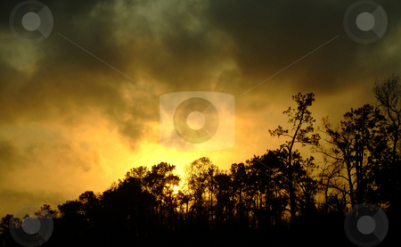 Nightfall in the Swamp stock photo, The sun is setting low over the trees in a Louisiana Swamp by Marburg