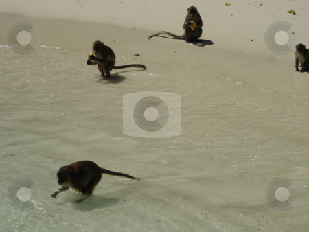 Monkey Beach in Thailand stock photo,  by Ritu Jethani