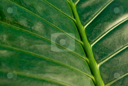 Blatt - Leaf stock photo, Blatt - Leaf by Wolfgang Heidasch