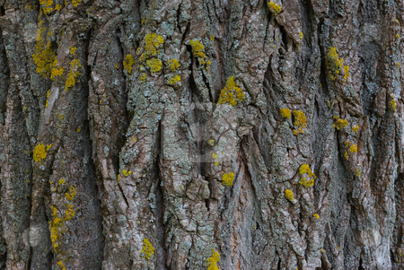 Baumrinde - Tree bark stock photo, Baumrinde - Tree bark by Wolfgang Heidasch