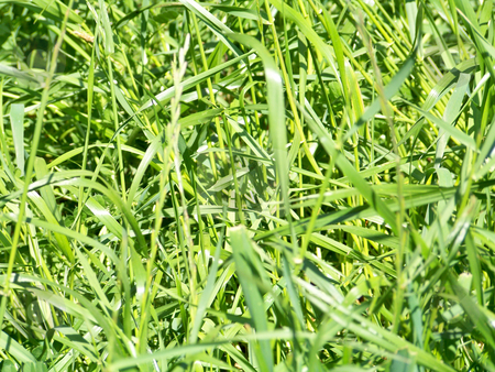 Green grass texture stock photo, Texture of natural green grass and herbs in the ground by Natalia Gesto