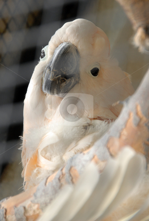 White parrot stock photo, White parrot on the tree at a zoo by Joanna Szycik