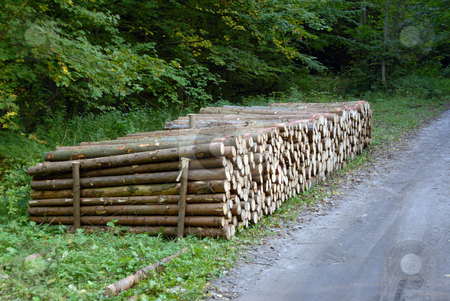 Wood piles stock photo, A lot of pile of wood in forest by Joanna Szycik