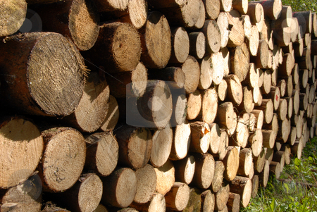 Pile of Wood stock photo, A lot of pile of Wood in autumn forest by Joanna Szycik