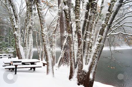 Winter Time At The Lake stock photo, Snow covered picnic benches and trees at a small lake by Lynn Bendickson