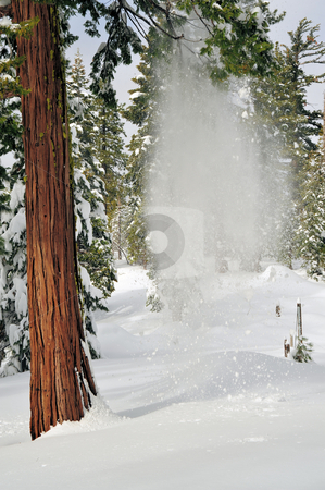 Falling Snow stock photo, Snow falling from a tree branch caught before hitting the ground by Lynn Bendickson