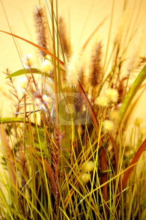 Assorted Decorative Dried Grass stock photo, Decorative dried grasses with a yellow clored background by Lynn Bendickson